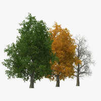 Yellow Poplar Old Tree Set