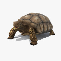 realistic turtle african spurred 3d max