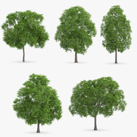 3ds max horse chestnut trees