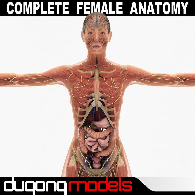 femaleanatomy_13.jpg