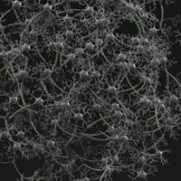 neuron network 3d model