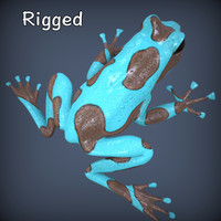 realistic poison dart frog 3d model