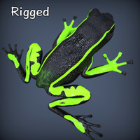 3d realistic poison frog