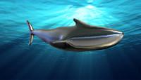 shark base mesh 3d model