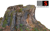 Tree Stump 8K Ultra HD