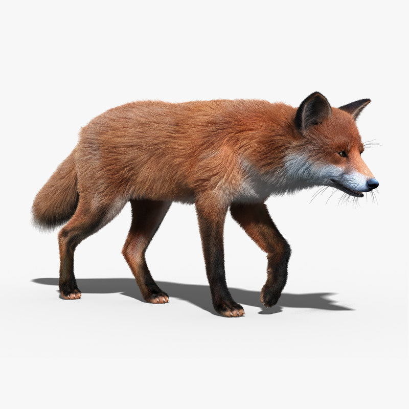 red_fox_FUR_RIGGED_01.jpg
