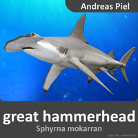 male great hammerhead shark 3d obj