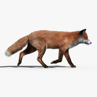 Red Fox(FUR)(ANIMATED)