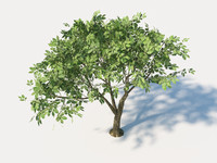 3d model hornbeam tree