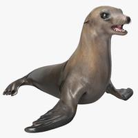3d sea lion model