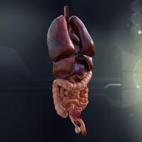 3d human internal organs