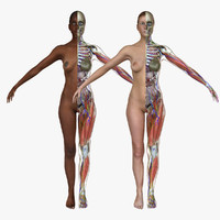 ma ultimate complete female anatomy