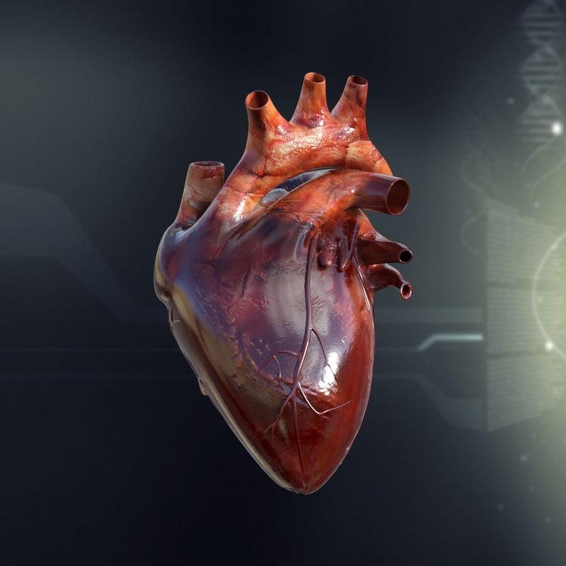 human_heart_anatomy_3d_model_c4d_max_obj_fbx_ma_lwo_3ds_3dm_stl_1295083_o.jpg