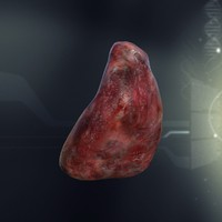 human spleen anatomy 3d model