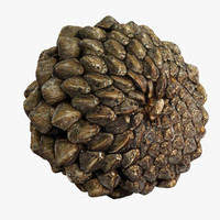 c4d closed pinecone