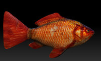 3d model golden fish