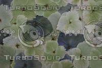 Flora_Texture_0006