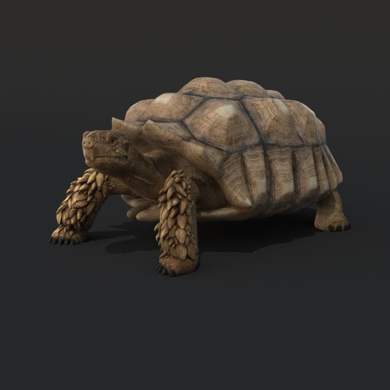 TurtleRigged.RGB_color.0001.png