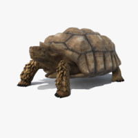 realistic turtle rig 3d max