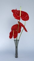 blend photorealistic anthurium bouquet flower