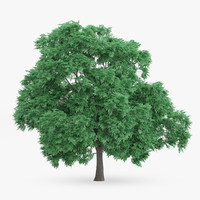 3d model of sweet chestnut 10