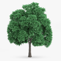 sweet chestnut 10 7m 3d model