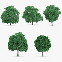3ds max sweet chestnut trees 5