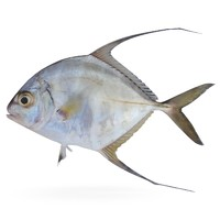 threadfin jack max