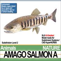 Amago Salmon A