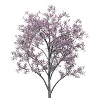 3 model pack Cercis siliquastrum Judas Tree and Plant