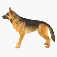 german shepherd 3d max