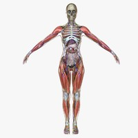 ultimate complete female anatomy obj