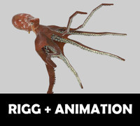 3d octopus vulgaris animation