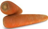 carrot 3d max