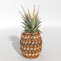 3d realistic pineapple model