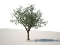 3d max hq tree
