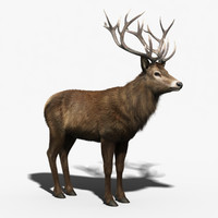 Red Deer Stag(FUR)