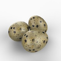 3d realistic quail egg model