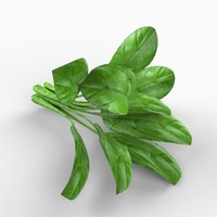 realistic spinach 3d obj
