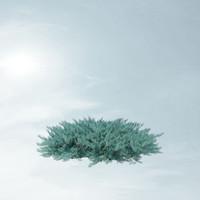 juniperus horizontalis blue chip 3d max