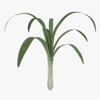 leek plant blend