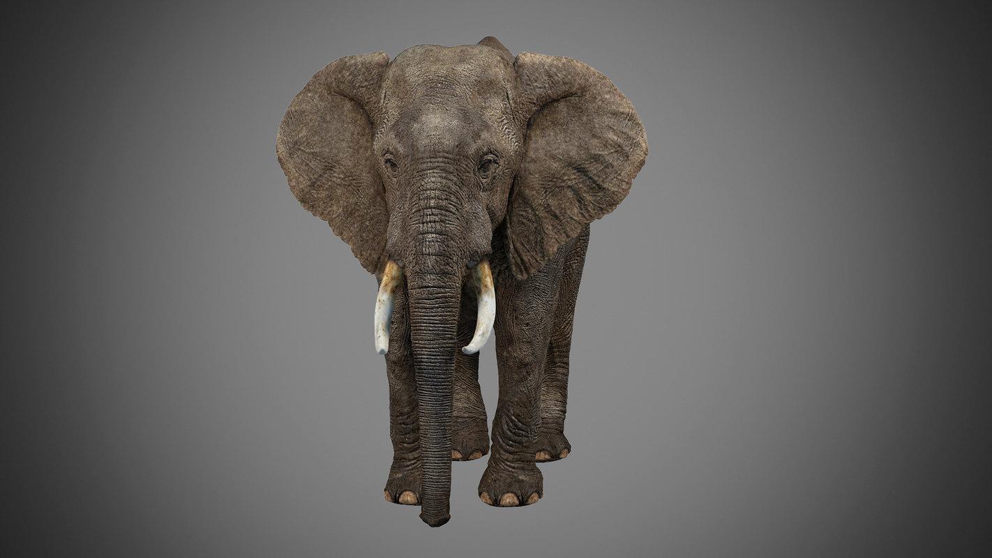 elephant_03.jpg