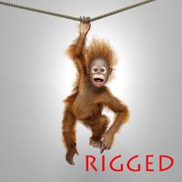 3d orangutan baby