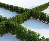 hedge generic 3d model
