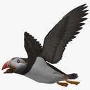 Puffin 3D models