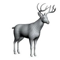 Male Deer Untextured