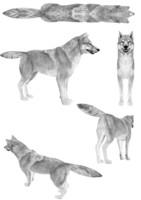 3d model dog canine