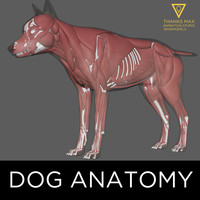 dog anatomy canine 3d ma