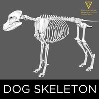3d model canine skeleton bones