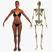 3d model female african american skeleton